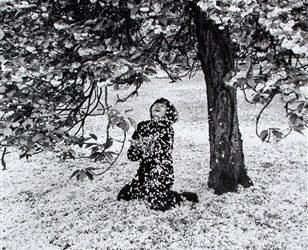 Boubat. Cerisier en fleurs. Paris. 1983