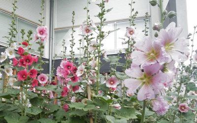 Ikkyû. Au milieu des fleurs